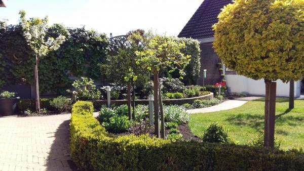 achtertuin met bloeiende kers